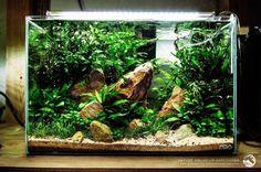 Amazing Aquarium Design Ideas Indoor Decorations 35 - Another! Planted Aquarium, Aquarium Terrarium, Tropical Fish Aquarium, Aquarium Fish Tank, Aquascaping, Aquarium Landscape, Nature Aquarium, Cichlid Aquarium, Nano Cube