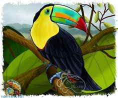 Keel-Billed Toucan Daily Creature Print by NadilynBeatosArt