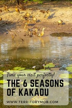 Time your visit just right - learn about the 6 seasons of Kakadu Based on thousands of years of Aboriginal knowledge, Kakadu recognises 6 different seasons. Australia Capital, Australia Country, Visit Australia, Western Australia, Australia Travel, Kakadu National Park, National Parks, Outback Australia, Camping