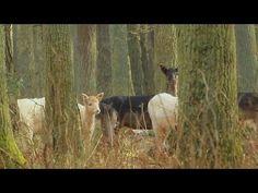 Daniele białe (albinosy) - YouTube