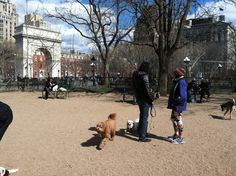 nyc dog runs - Google Search Dog Runs, Louvre, Nyc, Running, Google Search, Dogs, Keep Running, Pet Dogs, Why I Run