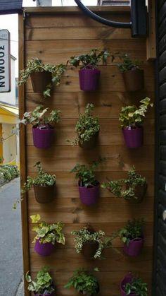 Herbs in hanging pots