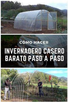 Garden Deco, Home Vegetable Garden, Urban Homesteading, Diy Greenhouse, Nature Plants, Green Life, Survival Tips, Dream Garden, Permaculture
