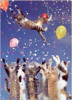 first birthday photoshoot Birthday Text, Happy Birthday Quotes, Cat Birthday, Happy Birthday Images, Birthday Pictures, Birthday Messages, Happy Birthday Wishes, Birthday Greetings, Funny Birthday