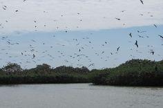 Isla de Aves. Tumbes.
