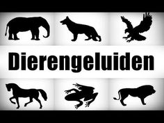 dieren geluiden waarbij men moet raden welk geluid bij welk dier past. Zoo Animals, Animals And Pets, Cute Animals, Funny Animals, Jungle Party, Jungle Safari, Zoo Preschool, Funny Cat Photos, Pet Day