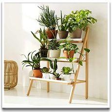 Trapphylla för växter!