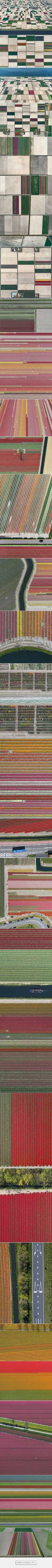 Tulip Fields on Behance - created via https://pinthemall.net