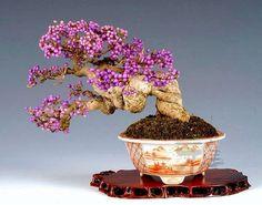 Bonsai-art, bonsai-tree, bonsai