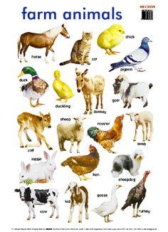 list of animals a-z English Time, English Course, Learn English Words, English Lessons, English Study, Farm Animals Preschool, Farm Animal Crafts, English Vocabulary, English Grammar