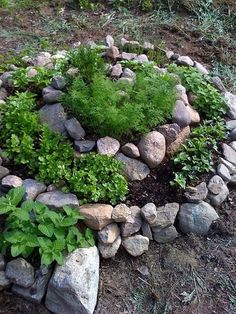 easy spiral herb garden.  you can make several of these in your back yard and devote them to different plants.. I have one devoted entirely to small lettuces that I pick while its still baby leaves and 2 more that are just for herbs. - Click image to find more Gardening Pinterest pins