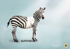 Tide: Zebra