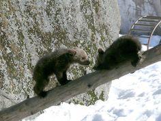 Ähtäri, Finland. Ähtäri Zoo, http://ahtarizoo.fi/index.php/en/