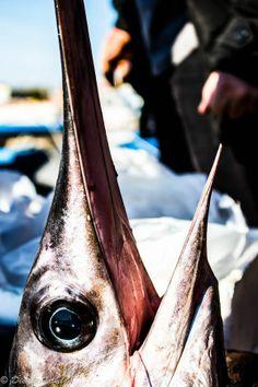 Salento, Porto Cesareo  Swordfish