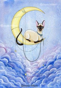 Siamese cat on the moon