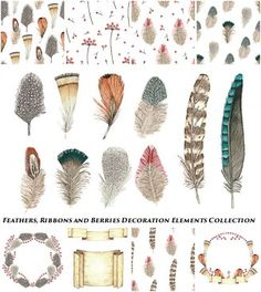 Ribbons and feather illustration vector collection