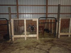I needed my horse panels back for use with my horse, so my husband built me these new stalls. They are made with lumber and hog panels. Mini Goats, Goat Shelter, Goat Pen, Show Goats, Barn Stalls, Goat Care, Farm Lifestyle, Boer Goats, Raising Goats