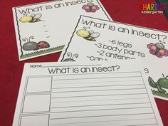 what is an insect? l