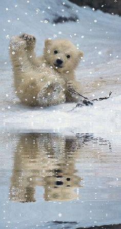 . Cute Creatures, Beautiful Creatures, Animals Beautiful, Cute Baby Animals, Animals And Pets, Funny Animals, Wild Animals, Animals In Snow, Baby Polar Bears
