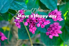 A collection of Beautiful Good Morning Images, beautiful good morning pictures, whatsapp good morning images and quotes. Sweet Good Morning Images, Morning Images In Hindi, Good Morning Picture, Morning Pictures, Have A Happy Day, Friends Image, Happy Birthday Images, Cool Baby Stuff, Picture Quotes