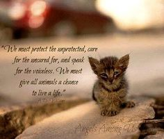 We must give all animals the chance to live a life.