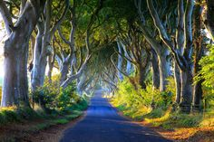 Top Shot: Dark Hedges at Dawn   Top Shot features the photo with the most votes from the previous day's Daily Dozen. The Daily Dozen is 12 photos chosen by the Your Shot editors each day from thousands of recent uploads. Our community has the chance to vote for their favorite from the selection. Dawn lights up a beech tree-lined avenue in Northern Ireland known as the Dark Hedges. Photograph by David Jeffrey.