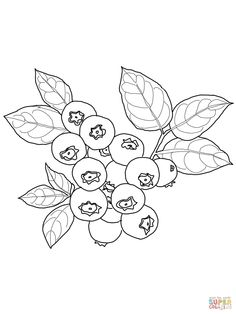 Blueberry coloring page | SuperColoring.com