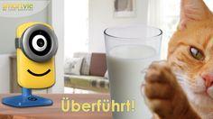 Minion Stuart Cam HD WiFi - Einfach unverbesserlich!