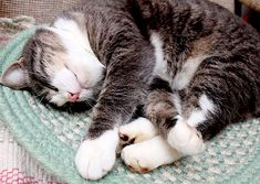 Is it Normal for Cats to Snore? | Catster