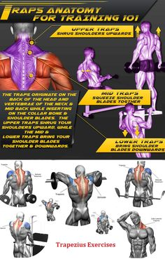Trapezius Exercises Traps Muscle, Upper Traps, Traps Workout, Power Rack, Back Exercises, Back Muscles, Muscle Groups, Muscle Fitness, Bodybuilding