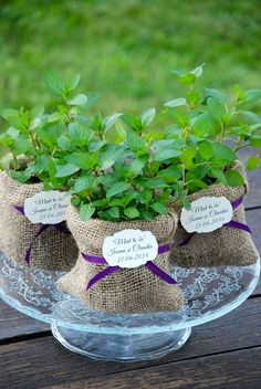 #mint #aromaticplants #plantemarturii #marturiiplante #plantecadou #marturii #nunta #botez #marturiimenta #marturiiplantearomatice #plantearomatice #favor #flowerfavors #plantfavors #aromaticfavors Plant Wedding Favors, Mint Plants, Wedding Giveaways, Retirement Parties, Shower Favors, Wedding Decorations, Wedding Ideas, Diy And Crafts, Bridal Shower