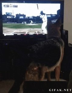 This German shepherd who was sick of video games. | 24 Dogs Who Are Total Dawgs