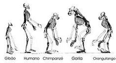 JUIZ DE FORA SEGURA : 12/02- Charles Darwin/(Martinho da Vila / Domingui...