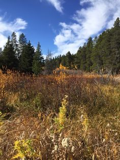Fall colours at Cypress Hills, Sask.  Pic taken by myself Thanksgiving Day, 2015.
