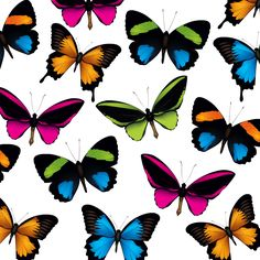 Butterfly scrapbook paper