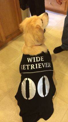 Wide retriever Halloween costume. Golden retriever