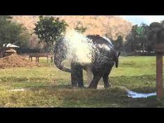 Elephant break the sprinkler and play - YouTube