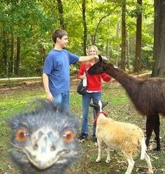 25 Hilarious Animal Photobombs - PawNation