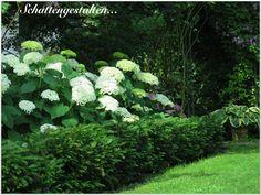 Garten am Engerain: Bitte mehr Respekt vor dem Schattengarten!