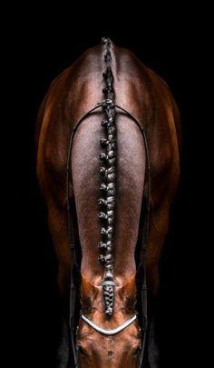 Dressage horse love it! All The Pretty Horses, Beautiful Horses, Animals Beautiful, Beautiful Braids, Pretty Braids, Horse Photos, Horse Pictures, Horse Braiding, Horse Mane