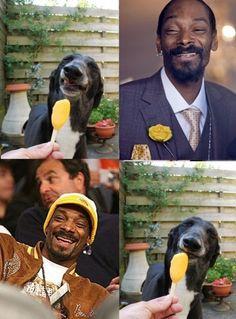 snoop dogg & snoop dogg's spirit dogg