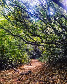 A trail in the Newlands Forest (Cape Town, South Africa) by Murray Mitchell (@murraym) on Instagram cr.c.