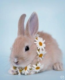 rabbits – Daily Pet Calendar