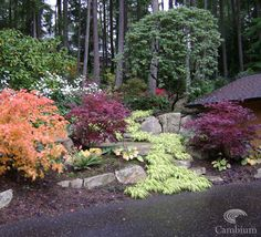 Under the cover of mature Fir and Cedar trees, a Pacific Northwest woodland garden shines with gorgeous flowering dogwoods, a bevy of rhododendrons, azaleas, native ferns, spring flowers and fantastic Japanese maples