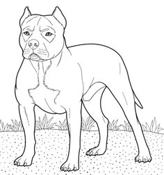 German shorthaired pointer coloring page from Dogs category