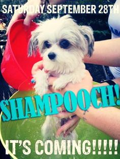 Shampooch is coming on 09/28!  http://www.orlandocanineconnections.com/shampooch-2013/
