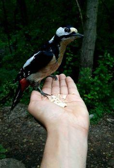 Utelias tikka söi pähkinöitä Tonin kädestä. Bird, Animals, Animales, Animaux, Birds, Animal Memes, Animal, Animais, Dieren