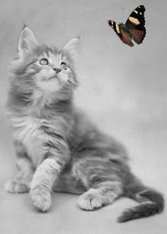 Hey, Butterfly!