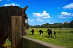 The Shires of Kohler Farms! Photographer: Rob Goldsmith Be Inspired! Shire Horse, Farms, Horses, Puppies, Inspired, Animals, Homesteads, Cubs, Animales