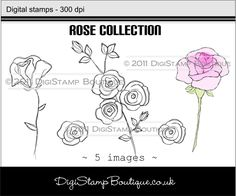 * Roses Collection